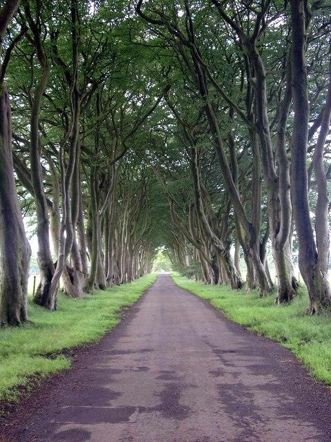 Tree avenue at Hartfield