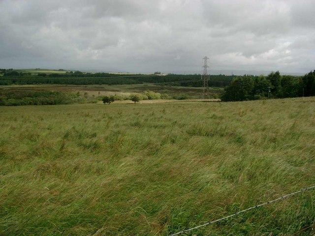 Wetland near Fauldhead
