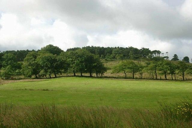 Threepgrass Wood