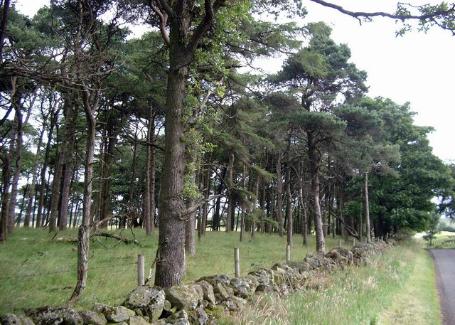 Trees at Lochliboside Hills