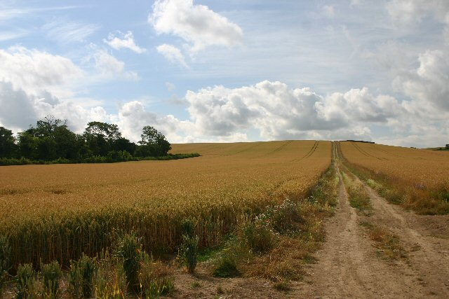 Farm track to Pepperton Hill