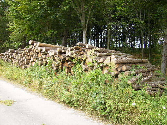 Logging operations at wood near lay-by on A170