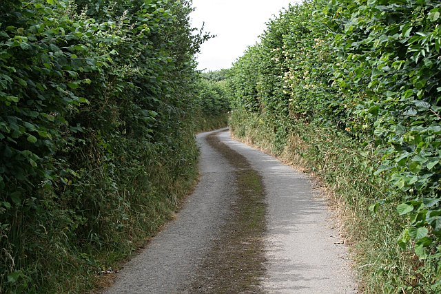 Narrow Lane with High Hedges