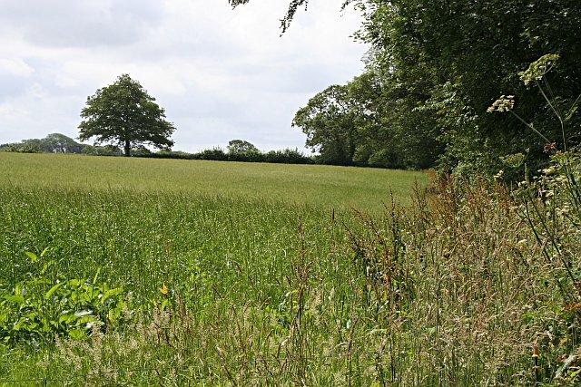 Field by Trewithen Farm