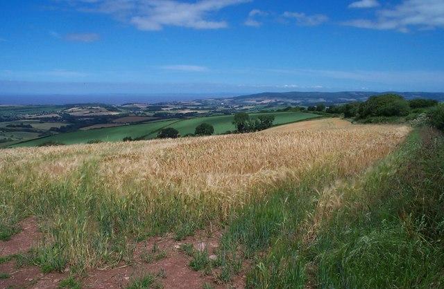 Arable field east of Stout's Way Lane