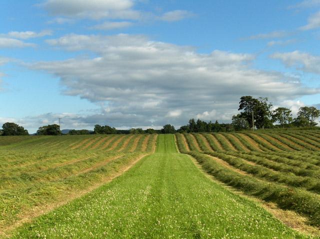 Hay-meadow, Strageath