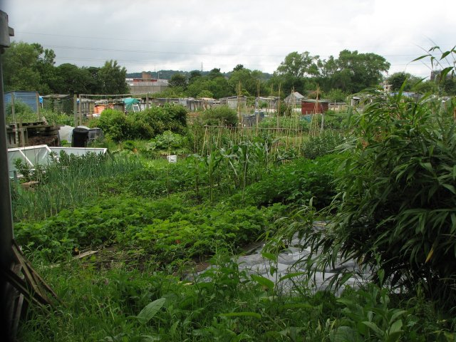 Saughton Mains Allotments