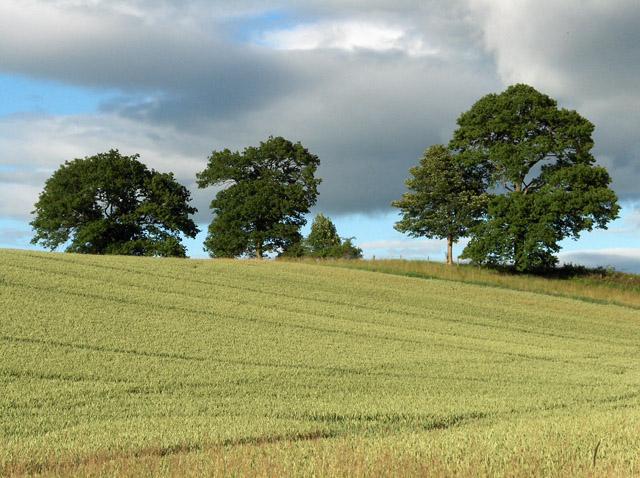 Farmland, Milton of Machany