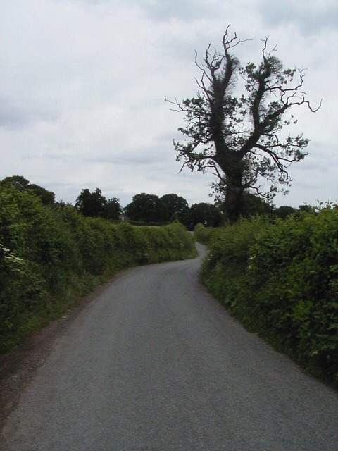 Narrow road with hedges