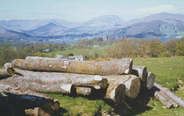 log pile near High Wray