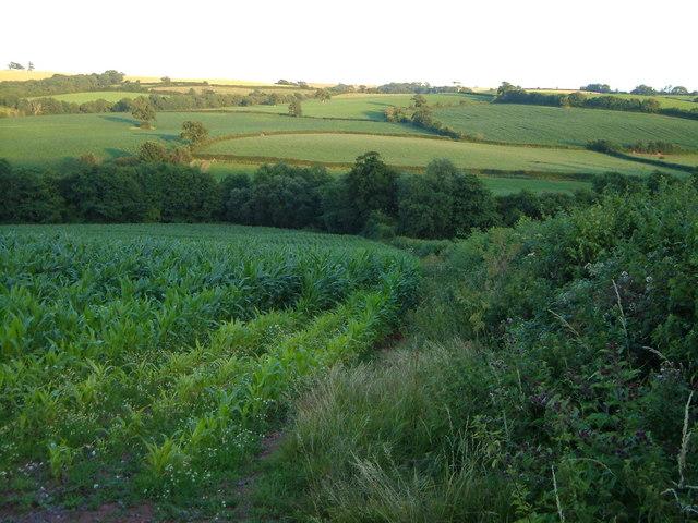 Culvery valley below Venny Tedburn
