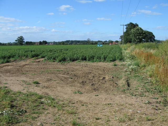 Potato field at Overley, near Alrewas, Staffordshire.
