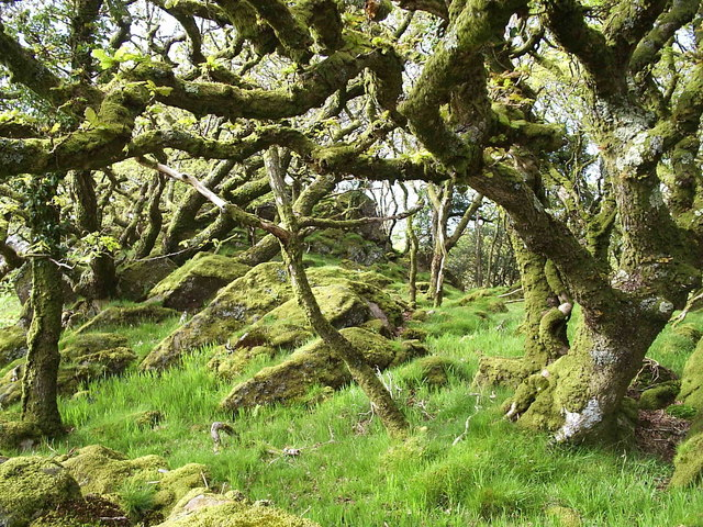 Coed Ty Canol Nature Reserve