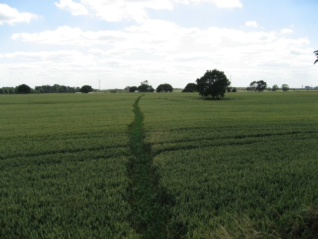 Tiptoe through the Barley
