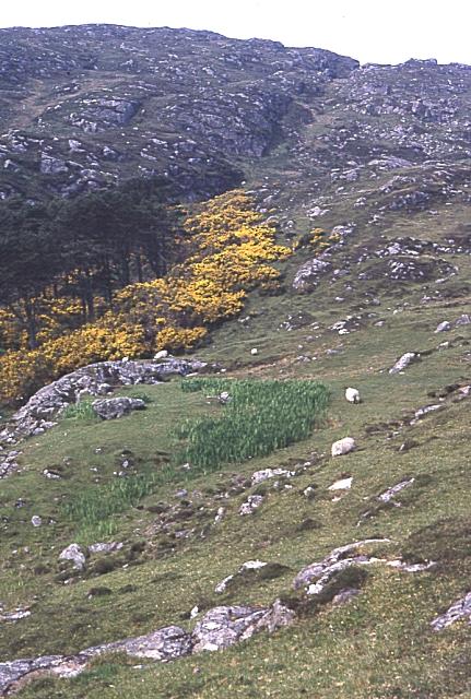 Trees near Earsaraidh