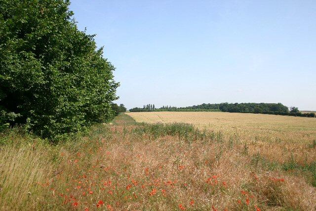 Field edge near Brockley Corner