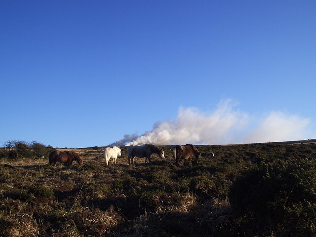 Ponies and heath fire on a winter's day