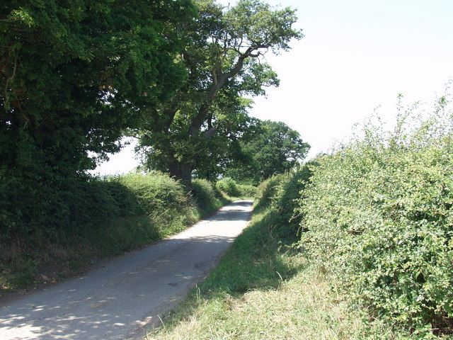 Great Oaks line the lane at Henlle
