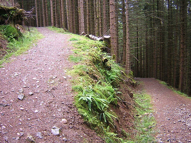 Hairpin Bend on Forest Path, Gleann Cia-Aig