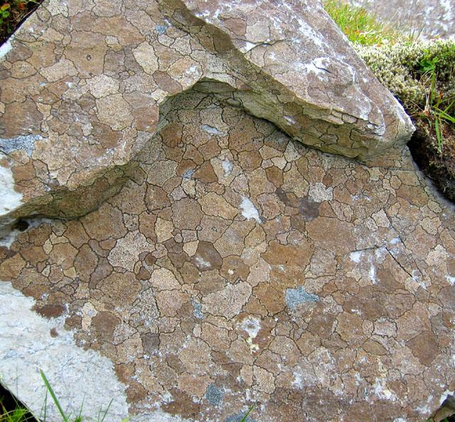 Lichen 'map'