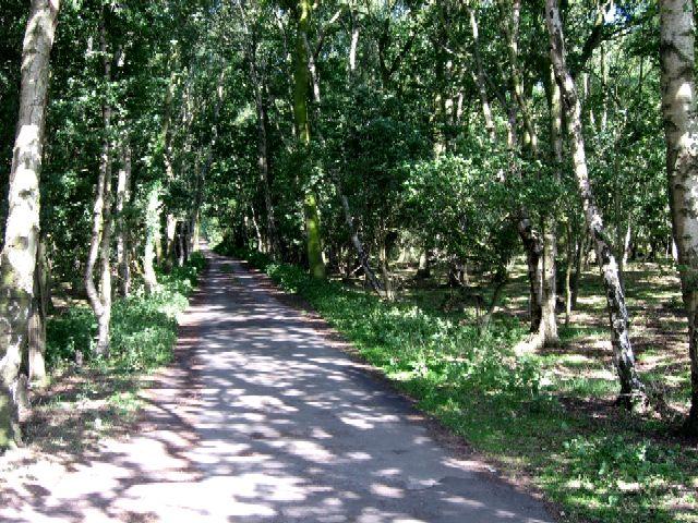 The Avenue into Skipwith Common