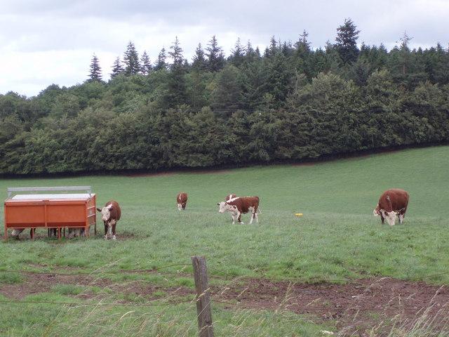 Biggins Farm