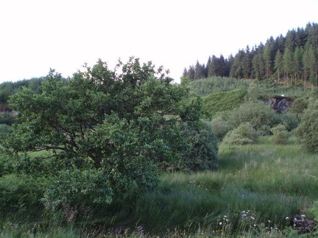 Forestry near Aberfoyle