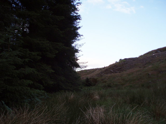 Clear fell and forestry
