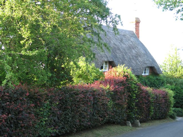 Thatched Cottage in Great Hinton