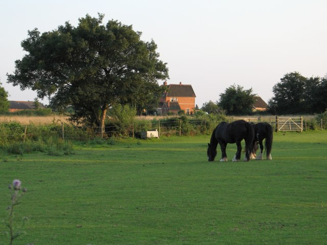 Horses in pasture at Great Hinton Crossroads