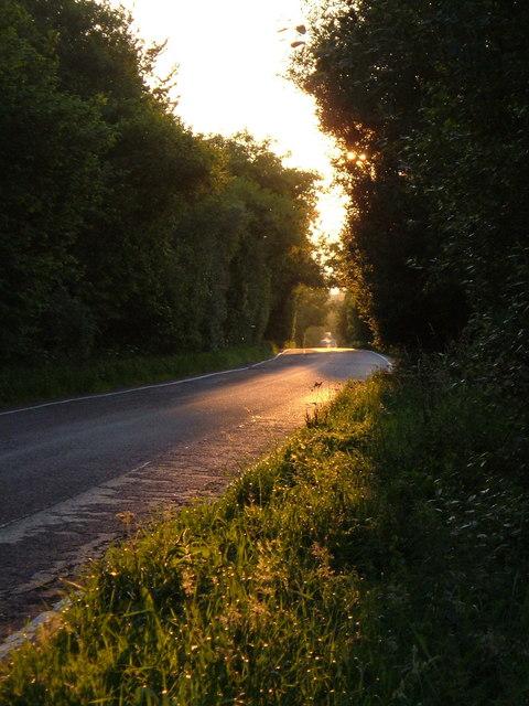 Seaton Road on Farway Hill