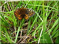 NM4257 : Pearl Bordered Fritillary, Laorin Bay by Lisa Jarvis