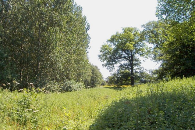 Lees Wood, Weston