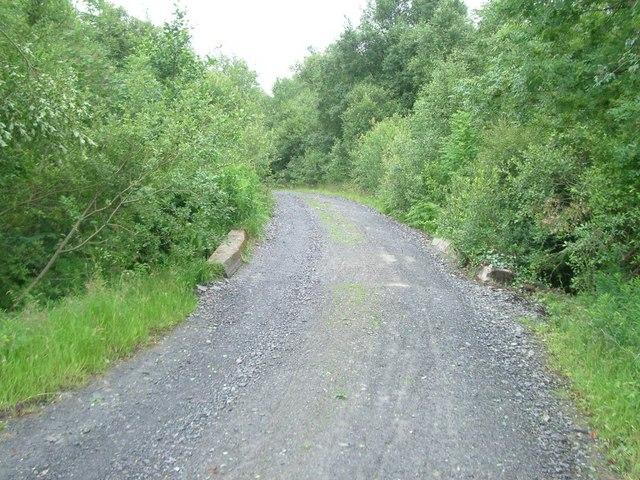 Track in Beddgelert Forest