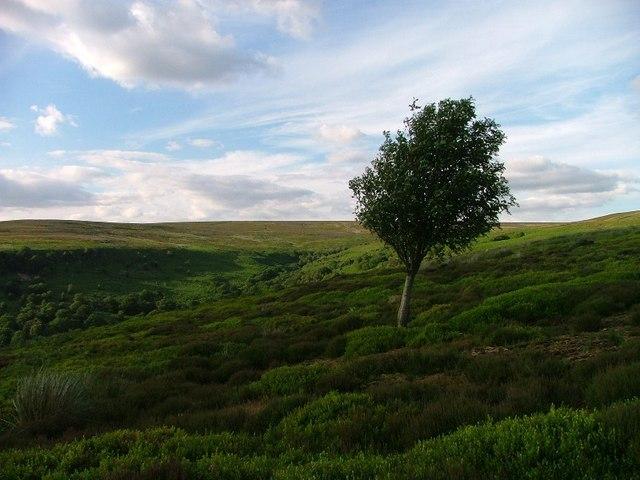 Tarn Hole From Bilsdale East Moor
