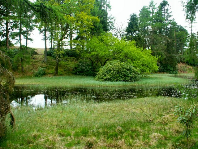 Tarn in the Woods