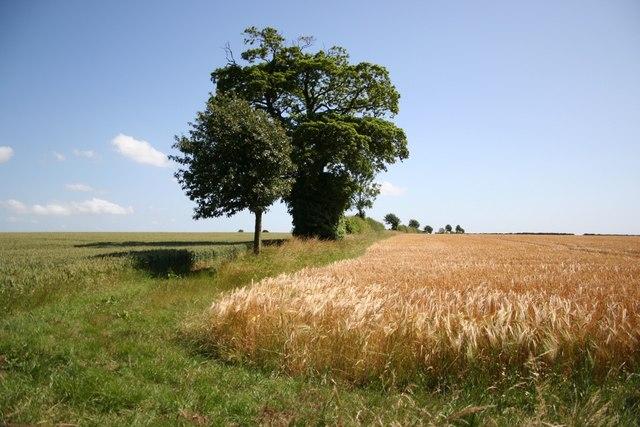 Farmland near Mog's Hollow
