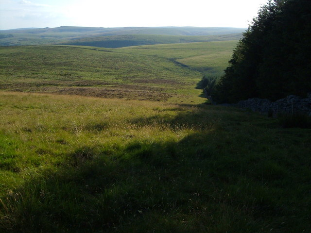 Dartmoor: edge of Fernworthy plantation on Assycombe Hill