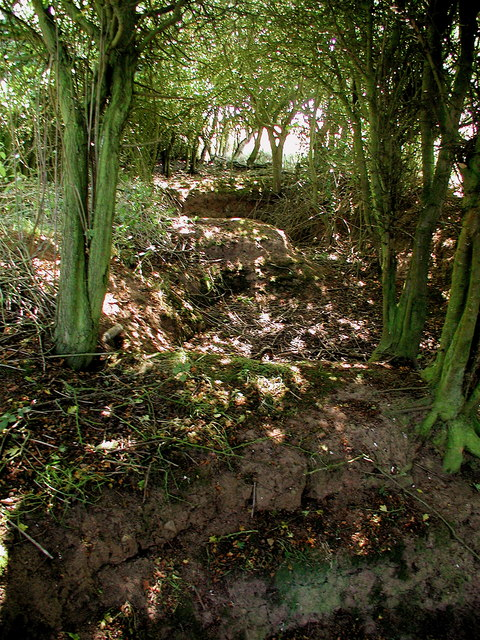 WW2 trenches at Smook Hills, Hollym