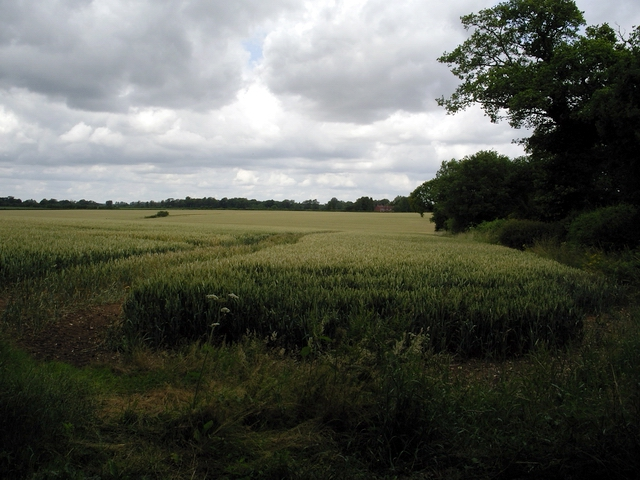 Field at Northington Corner