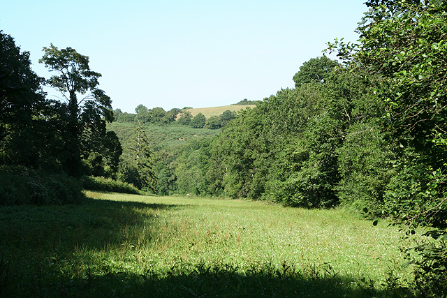 Crediton Hamlets: by Scutch Hill Copse