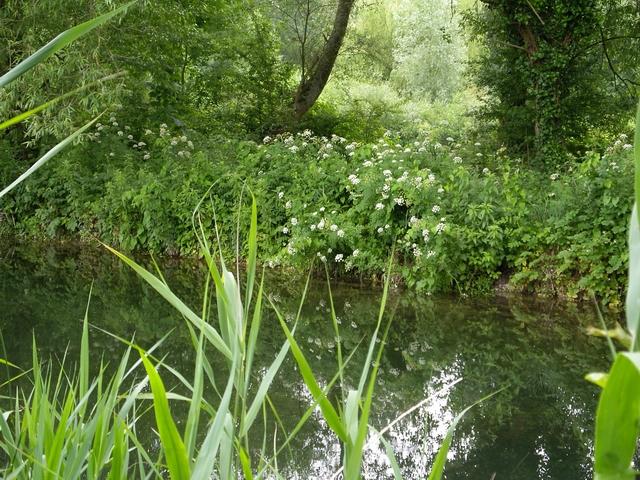 River Itchen at Winnall Moors