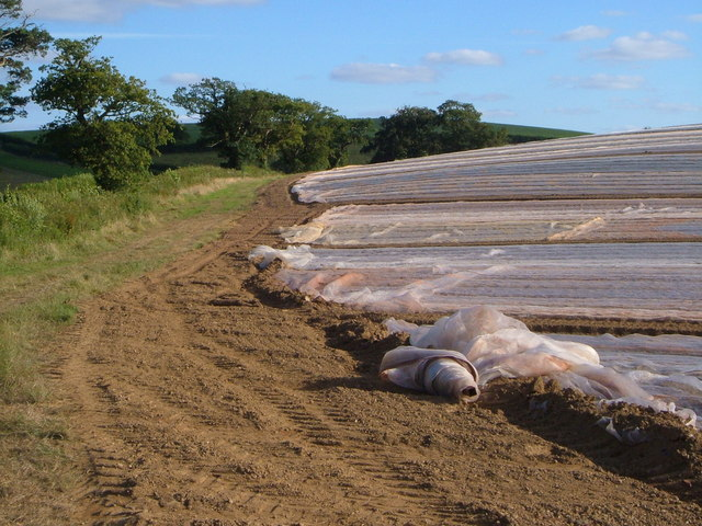 Plastic farming on Round Hill