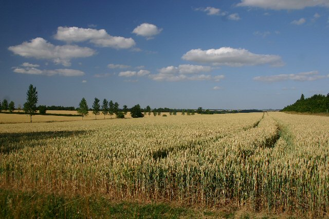 Wheat field at HMP Highpoint