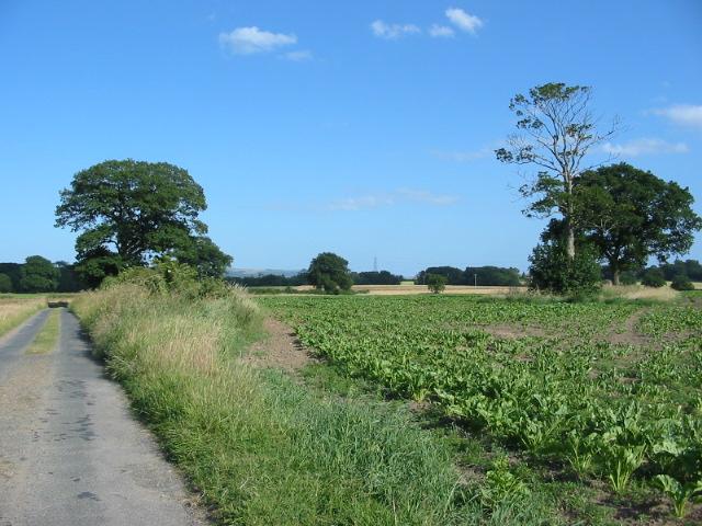 Farmland by unfenced public road near Bossall