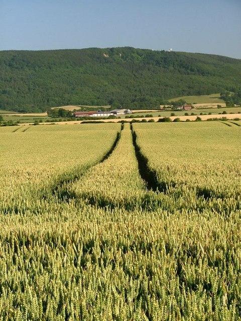 Field Off Parson Back Lane