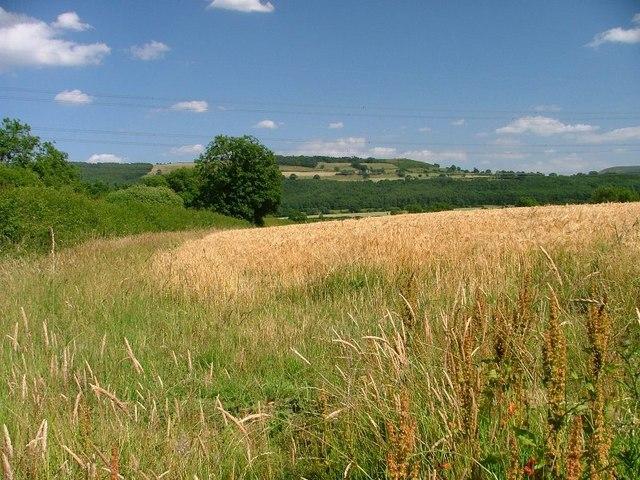 Field Off Stony Lane