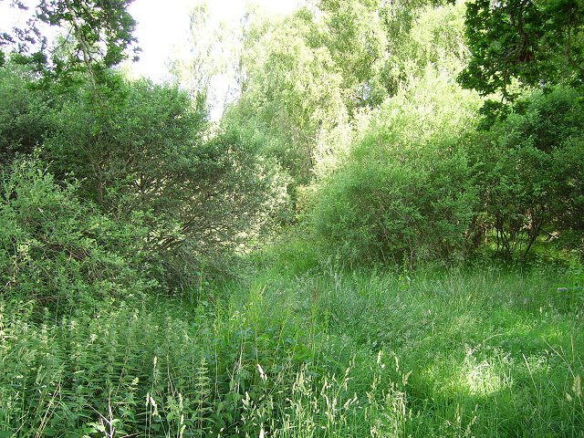 Linne Wood
