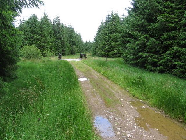 Forest track at bridge over Kirreoch Burn