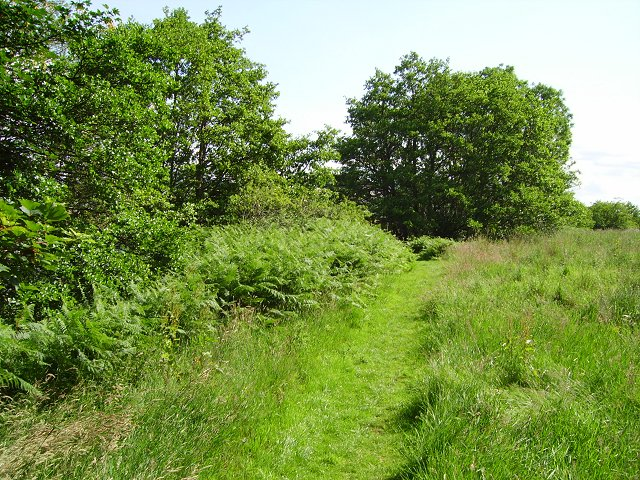 Riverside meadow